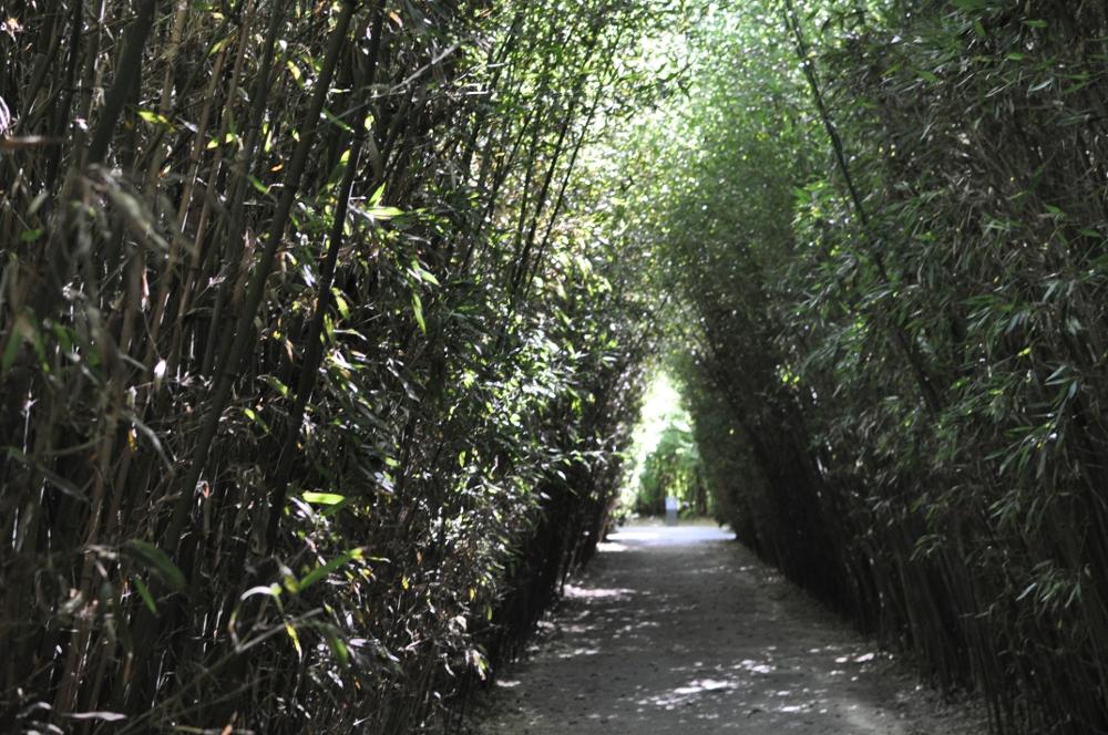 rocaille-blog-labirinto-franco-maria-ricci-fontanellato (69)