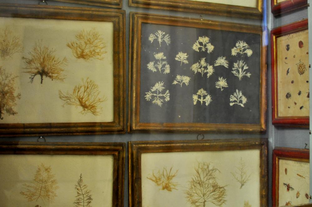 rocaille-blog-reggio-emilia-museo-lazzaro-spallanzani (12)