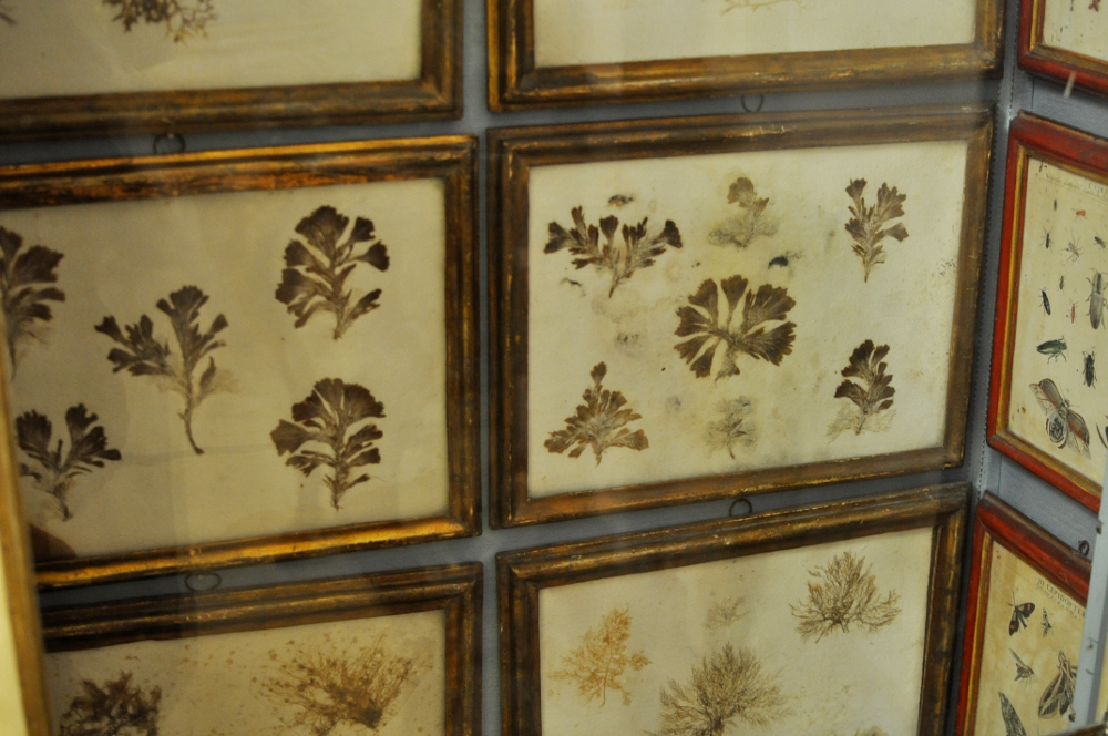 rocaille-blog-reggio-emilia-museo-lazzaro-spallanzani (13)