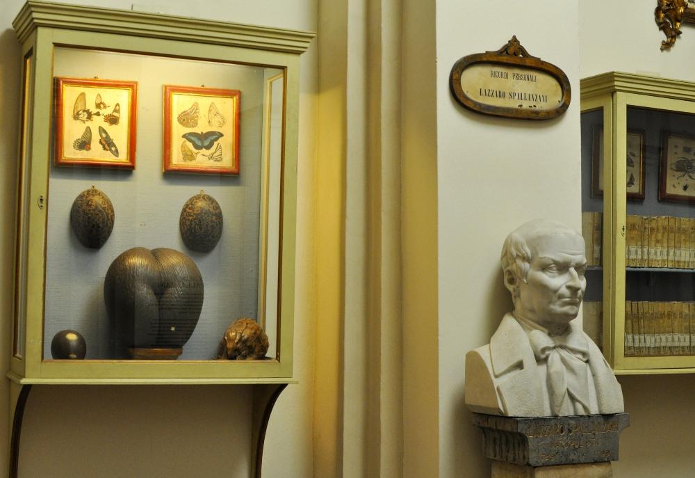 rocaille-blog-reggio-emilia-museo-lazzaro-spallanzani (14)