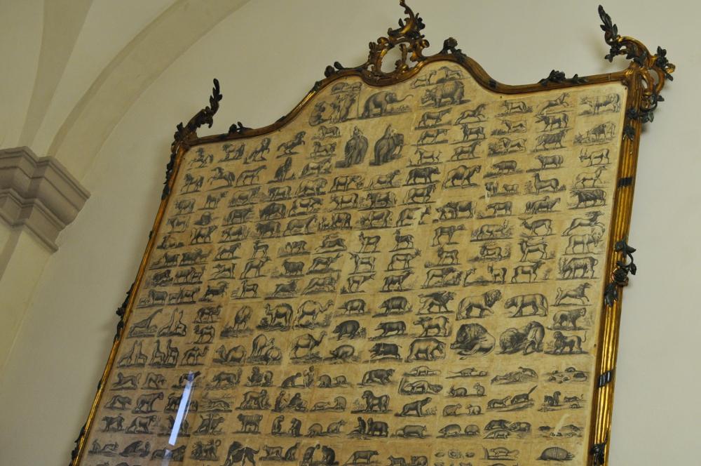 rocaille-blog-reggio-emilia-museo-lazzaro-spallanzani (15)