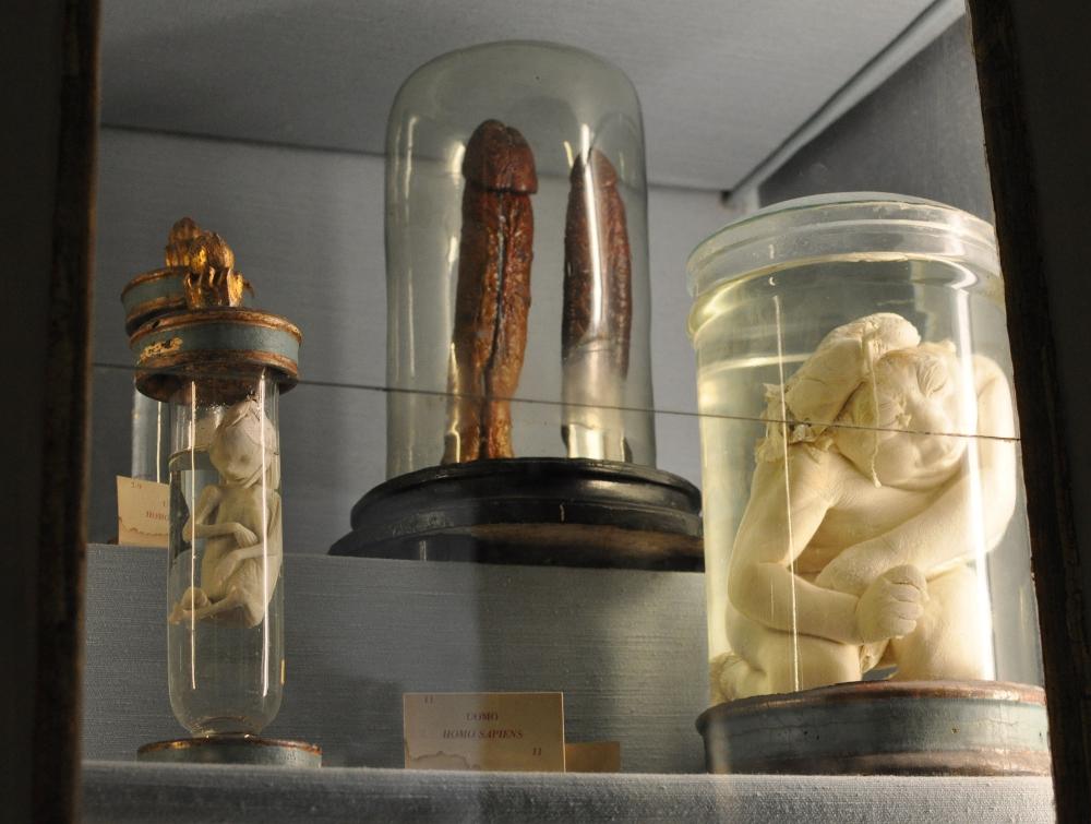rocaille-blog-reggio-emilia-museo-lazzaro-spallanzani (17)