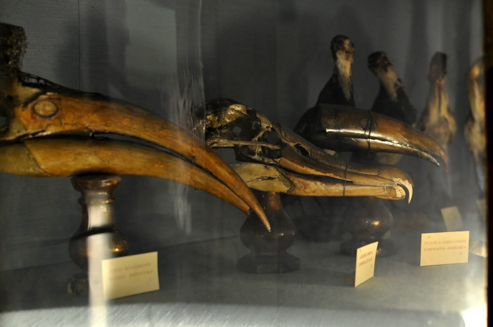rocaille-blog-reggio-emilia-museo-lazzaro-spallanzani (22)