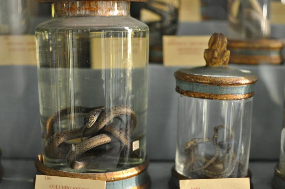 rocaille-blog-reggio-emilia-museo-lazzaro-spallanzani (25)
