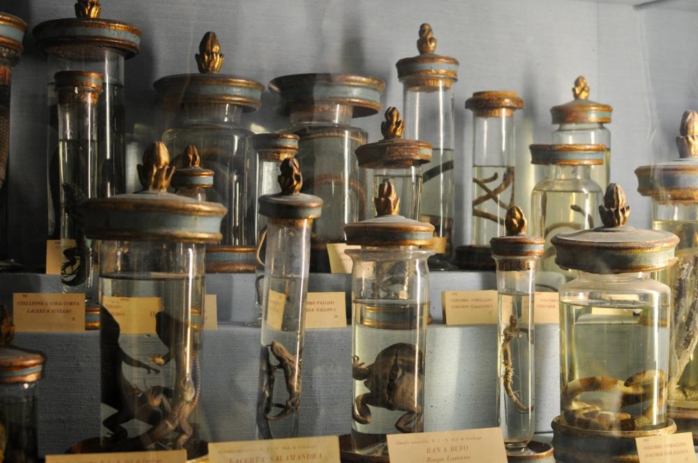 rocaille-blog-reggio-emilia-museo-lazzaro-spallanzani (26)