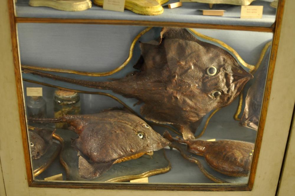 rocaille-blog-reggio-emilia-museo-lazzaro-spallanzani (28)