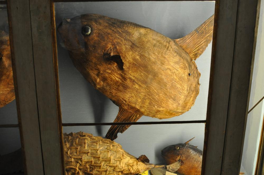 rocaille-blog-reggio-emilia-museo-lazzaro-spallanzani (31)
