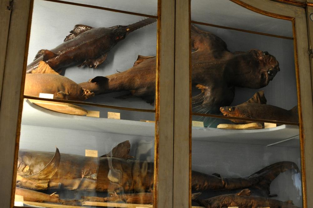 rocaille-blog-reggio-emilia-museo-lazzaro-spallanzani (33)
