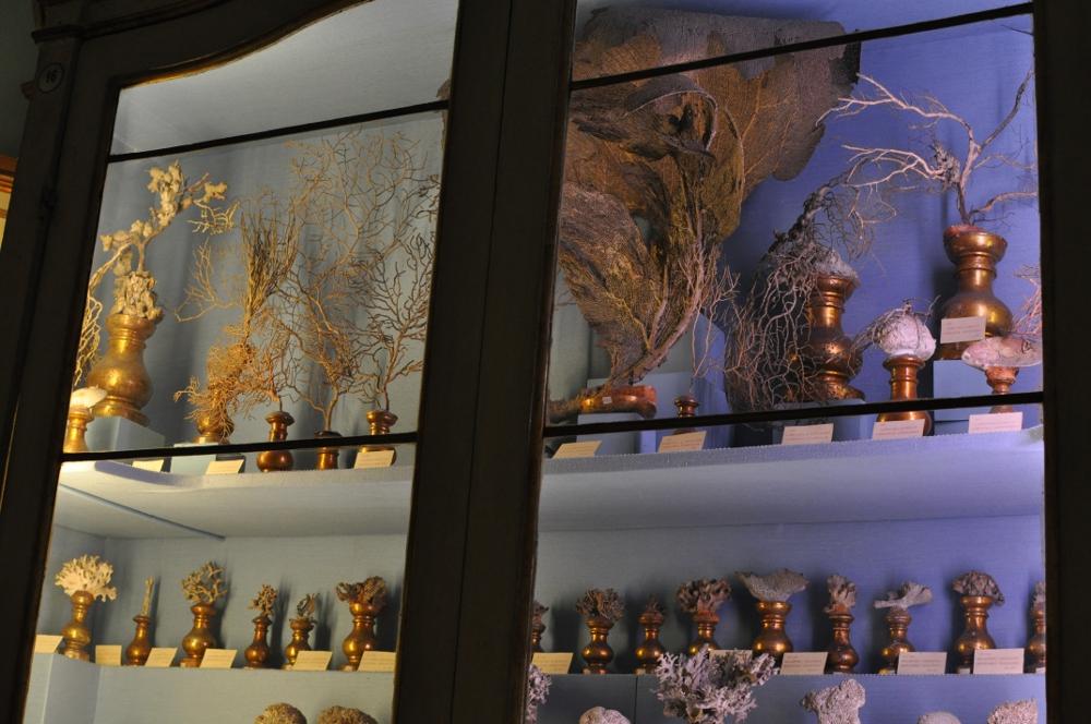 rocaille-blog-reggio-emilia-museo-lazzaro-spallanzani (35)
