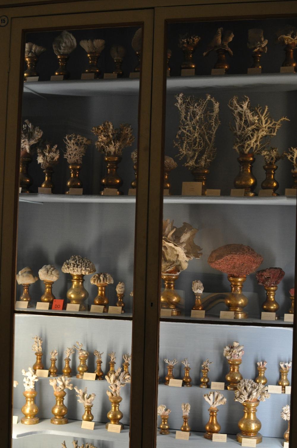 rocaille-blog-reggio-emilia-museo-lazzaro-spallanzani (36)