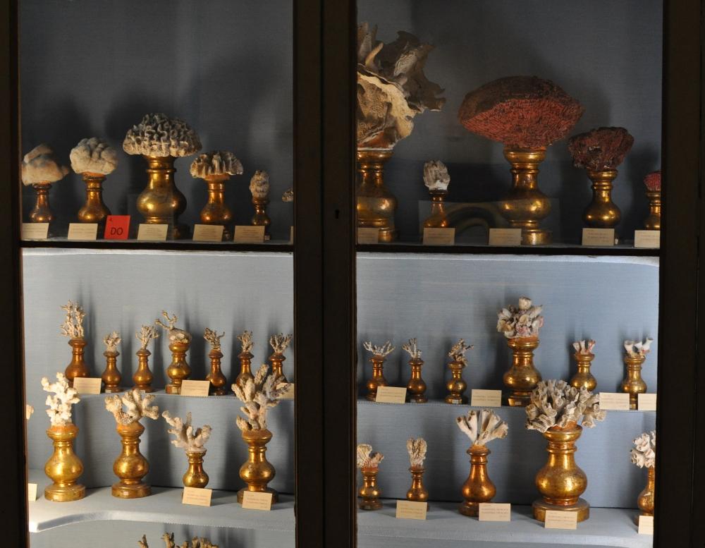 rocaille-blog-reggio-emilia-museo-lazzaro-spallanzani (37)