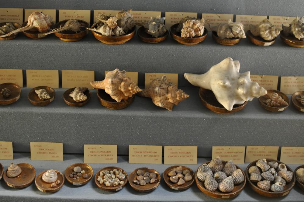 rocaille-blog-reggio-emilia-museo-lazzaro-spallanzani (38)