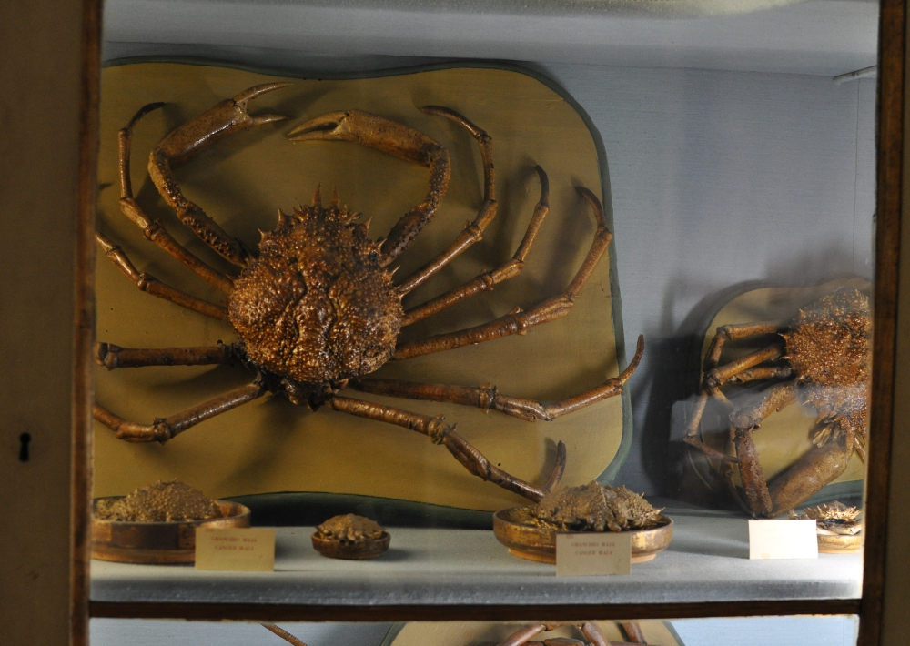 rocaille-blog-reggio-emilia-museo-lazzaro-spallanzani (42)