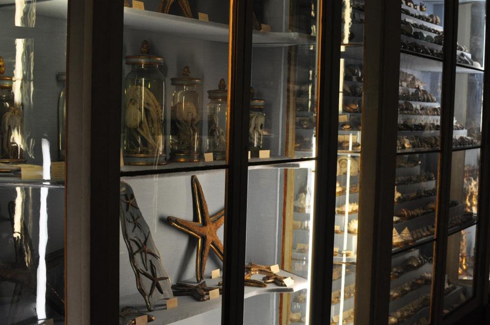 rocaille-blog-reggio-emilia-museo-lazzaro-spallanzani (43)
