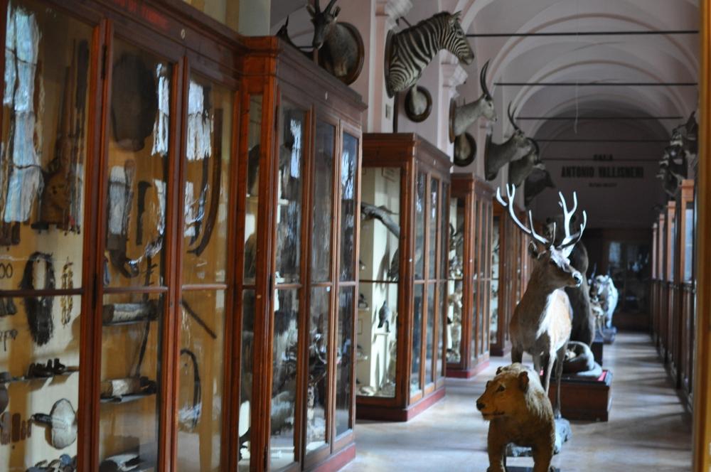 rocaille-blog-reggio-emilia-museo-lazzaro-spallanzani (44)