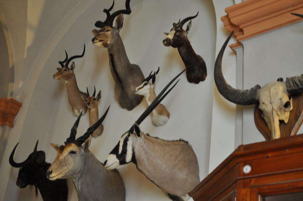 rocaille-blog-reggio-emilia-museo-lazzaro-spallanzani (45)