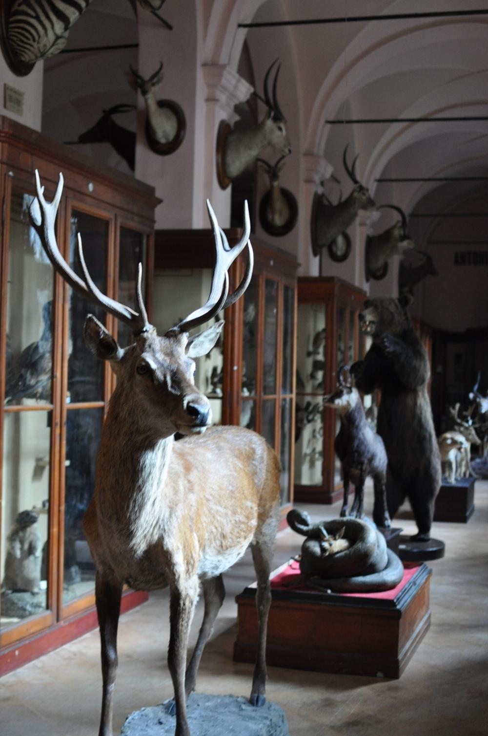 rocaille-blog-reggio-emilia-museo-lazzaro-spallanzani (52)