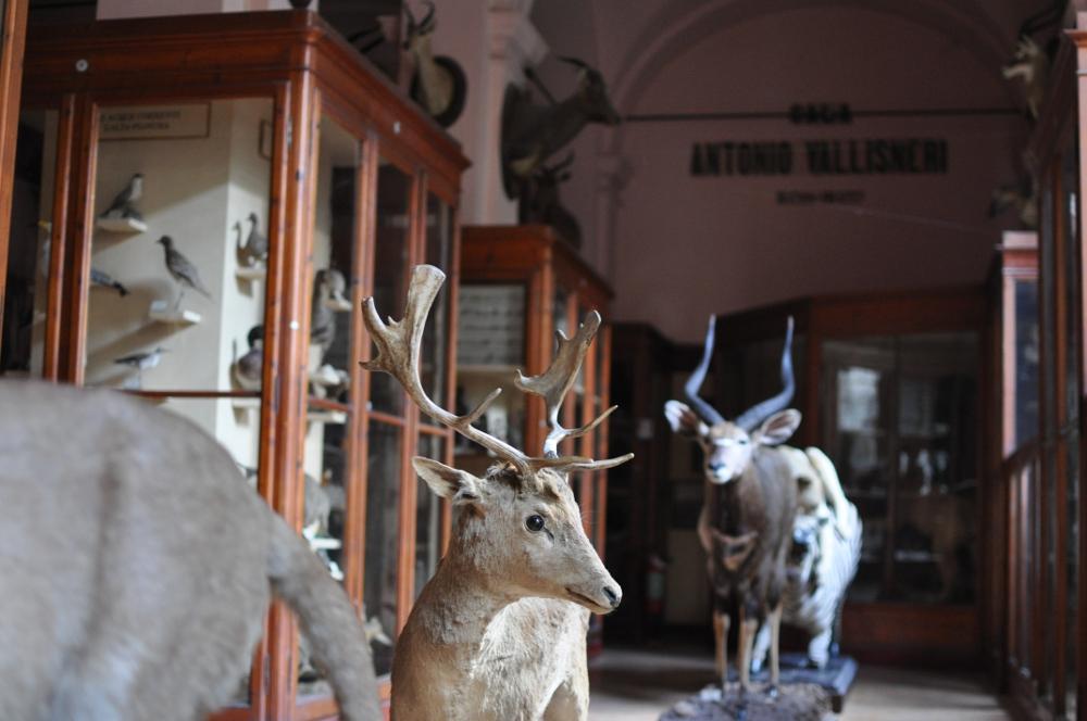 rocaille-blog-reggio-emilia-museo-lazzaro-spallanzani (55)