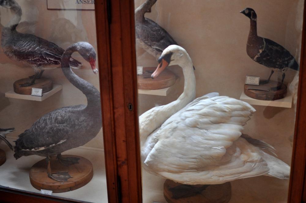 rocaille-blog-reggio-emilia-museo-lazzaro-spallanzani (56)