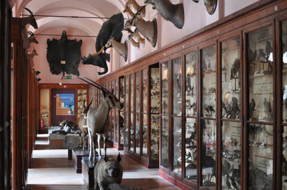 rocaille-blog-reggio-emilia-museo-lazzaro-spallanzani (58)