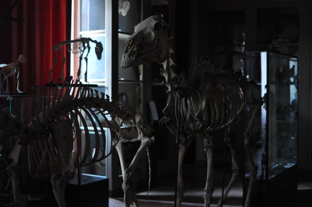 rocaille-blog-reggio-emilia-museo-lazzaro-spallanzani (60)