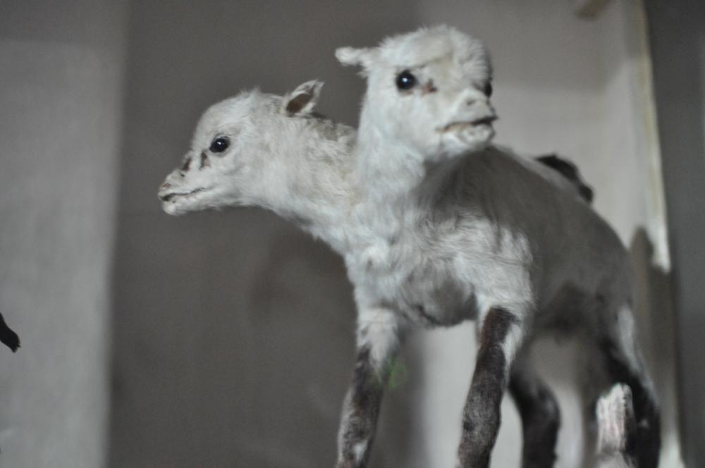 rocaille-blog-reggio-emilia-museo-lazzaro-spallanzani (61)