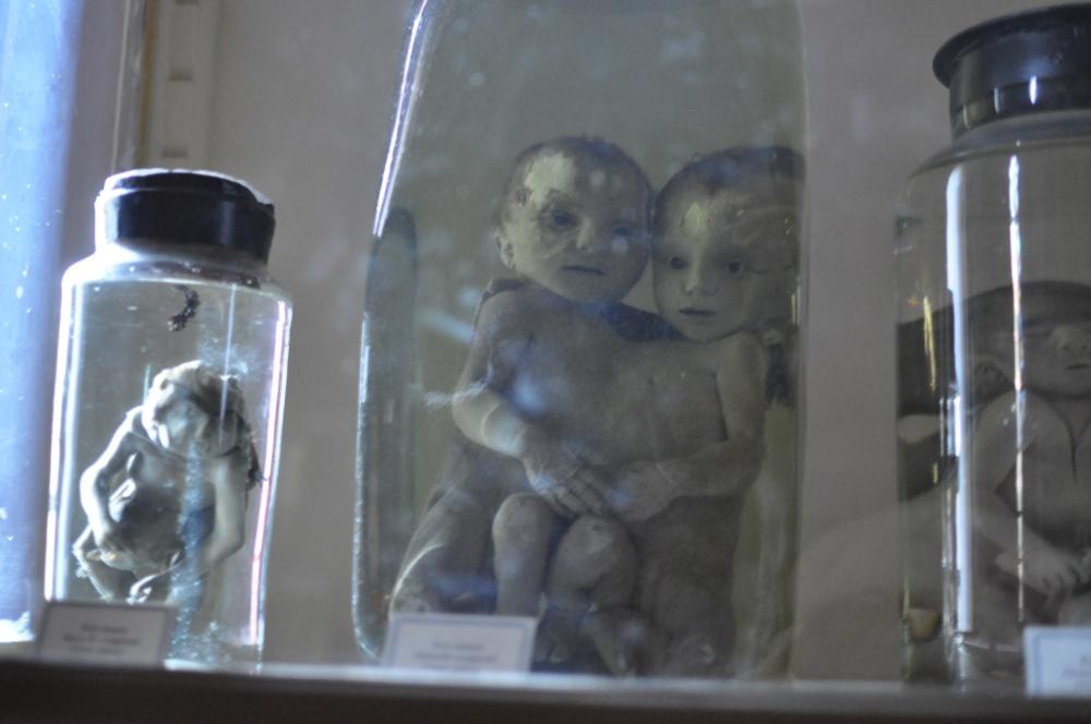 rocaille-blog-reggio-emilia-museo-lazzaro-spallanzani (63)