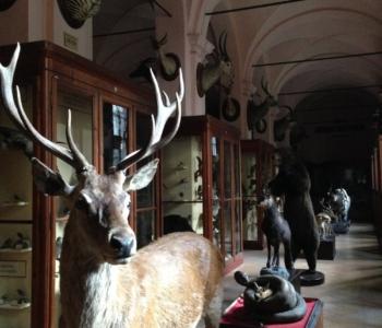 rocaille-blog-reggio-emilia-museo-lazzaro-spallanzani