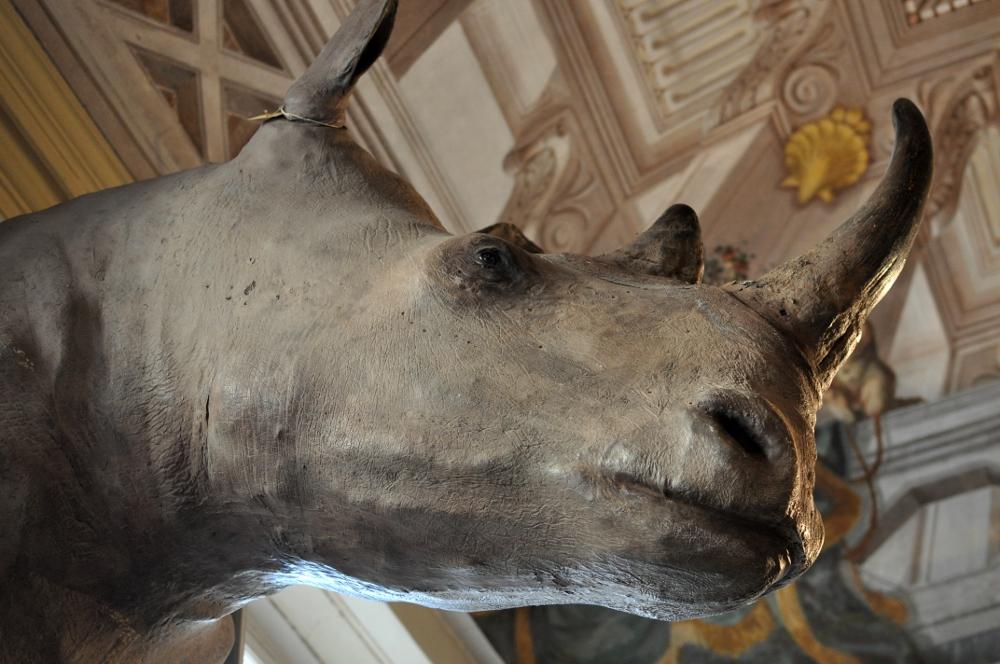 rocaille-blog-ethnologica-galleria-wunderkammer-andrea-filippi-forlì (22)