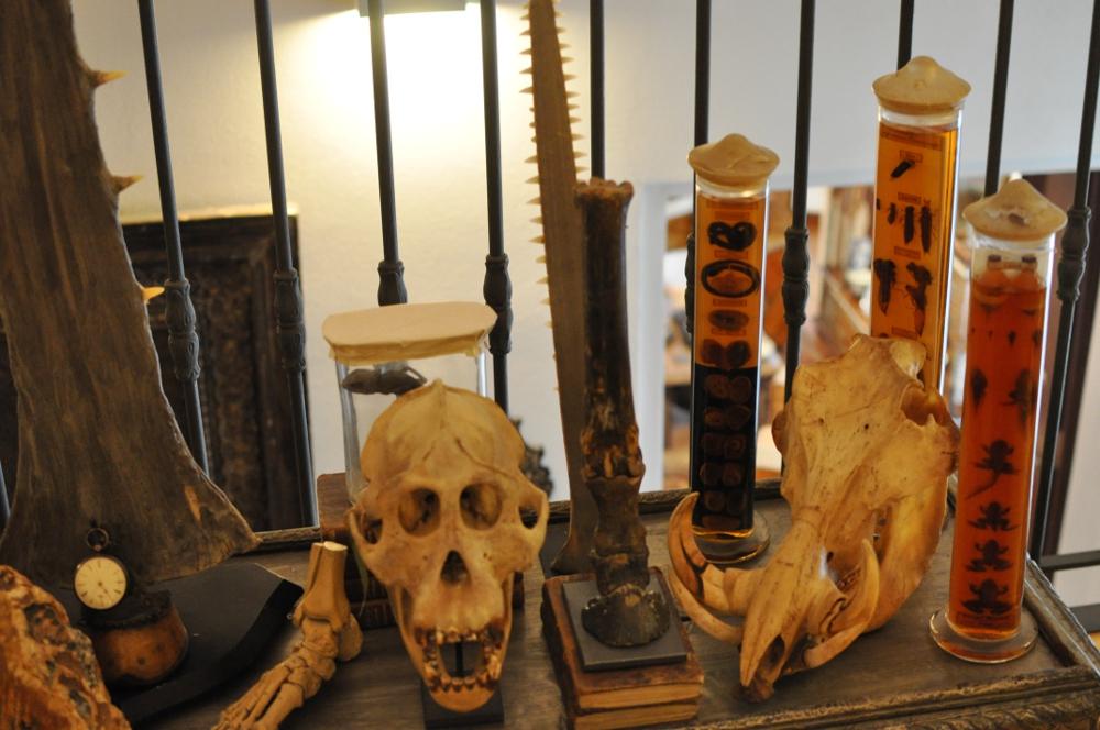 rocaille-blog-ethnologica-galleria-wunderkammer-andrea-filippi-forlì (33)