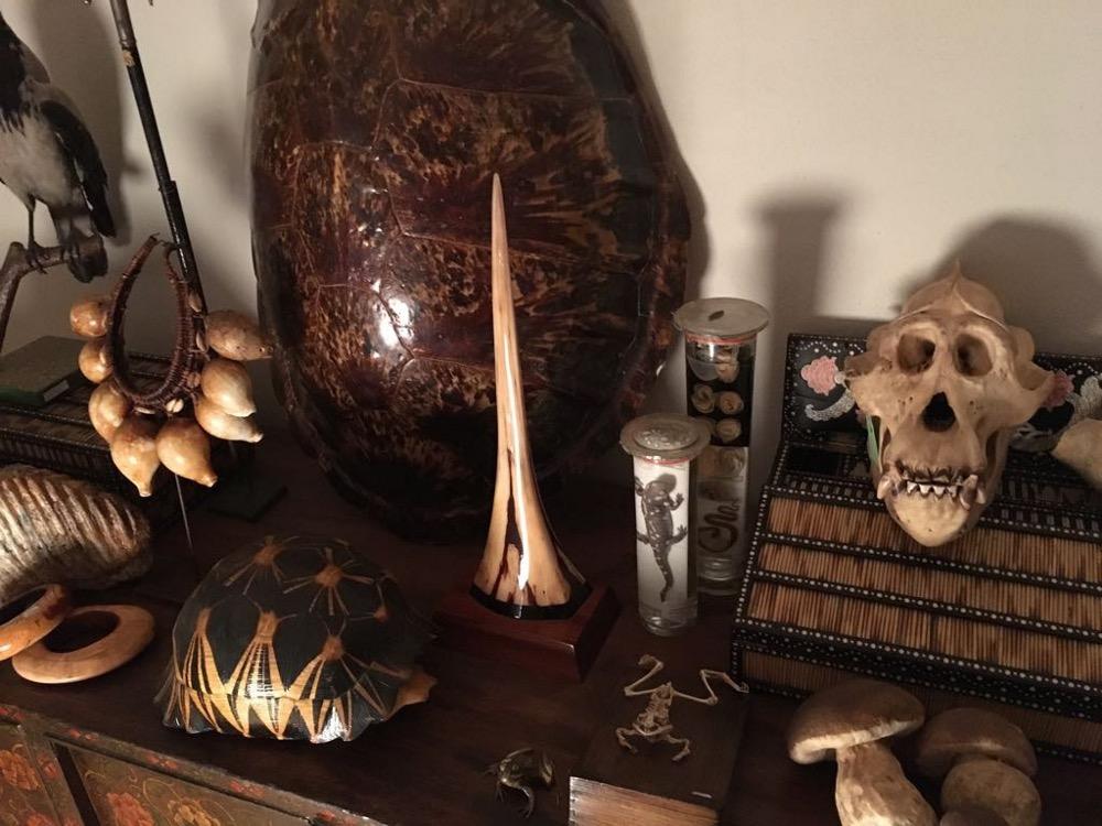 rocaille-blog-ethnologica-galleria-wunderkammer-andrea-filippi-forlì (63)