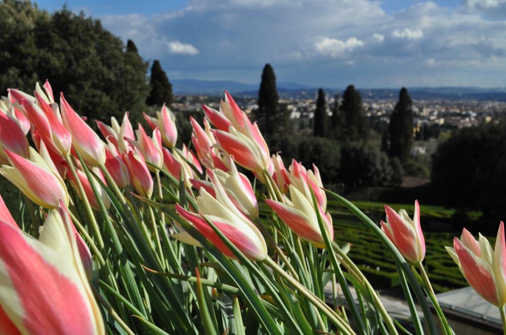 rocaille-blog-villa-la-petraia-firenze-toscana (13)