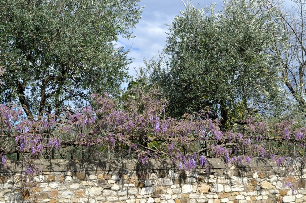 rocaille-blog-villa-la-petraia-firenze-toscana