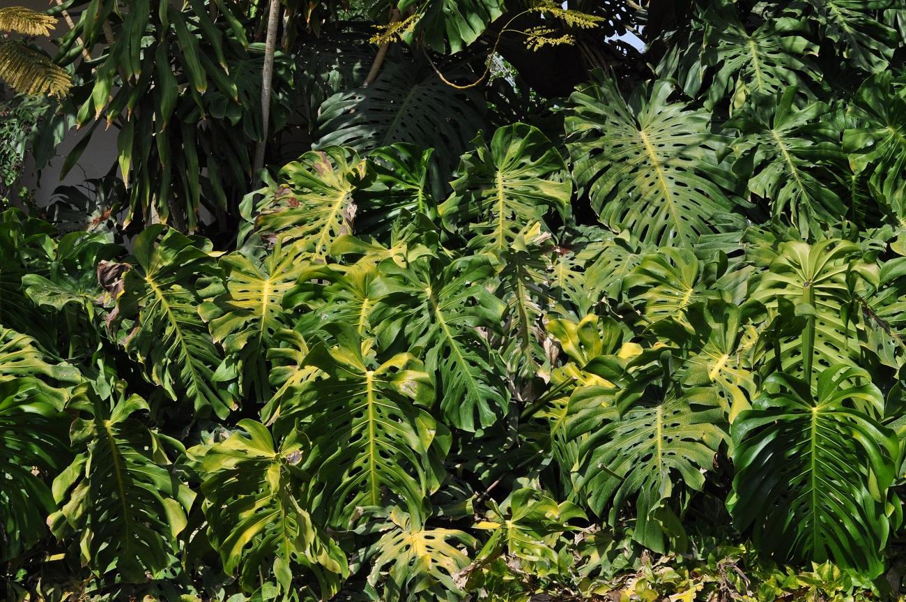 rocaille-blog-israel-dead-sea-ein-gedi-kibbutz-botanical-gardens-10