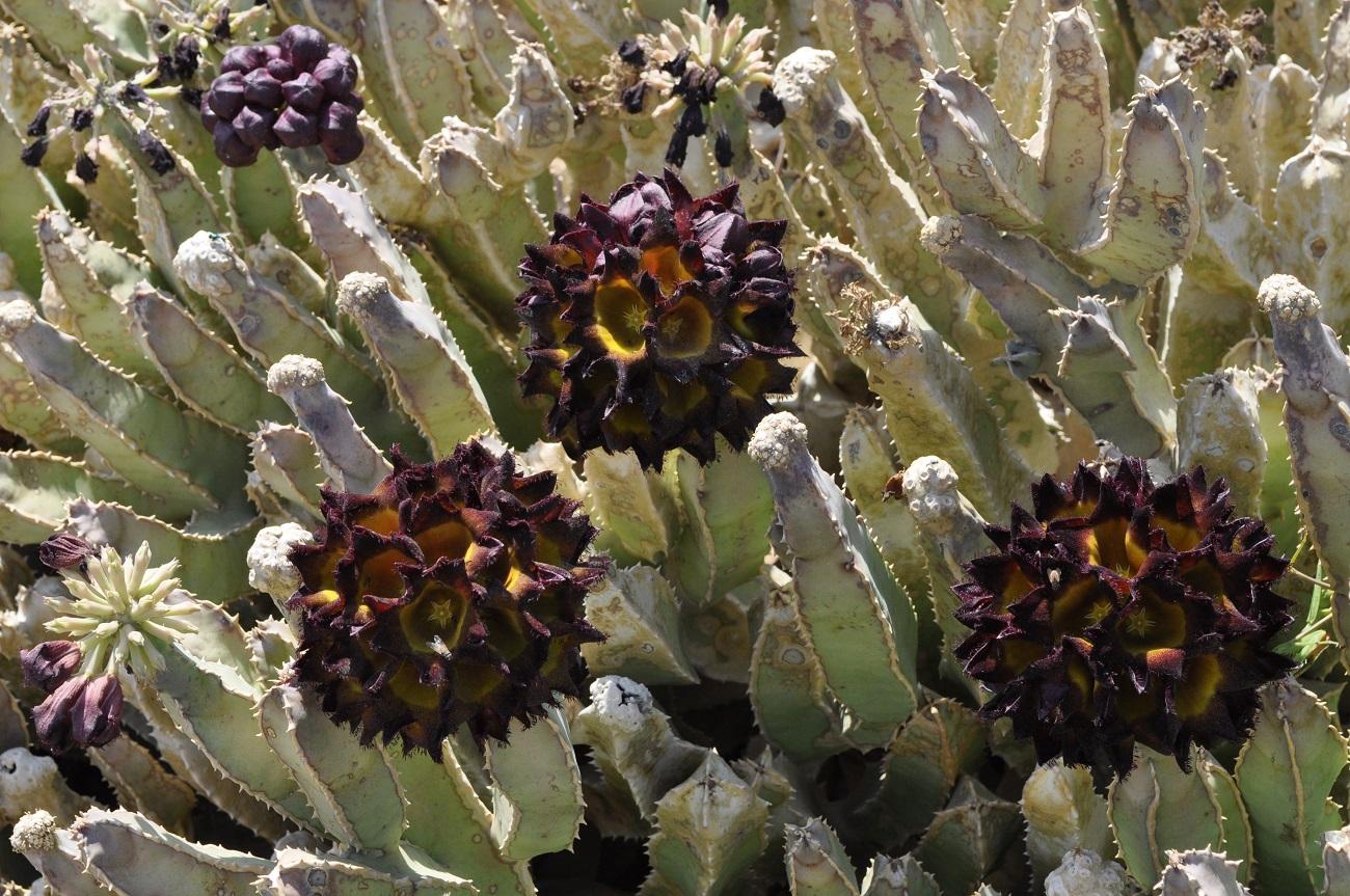 rocaille-blog-israel-dead-sea-ein-gedi-kibbutz-botanical-gardens-12