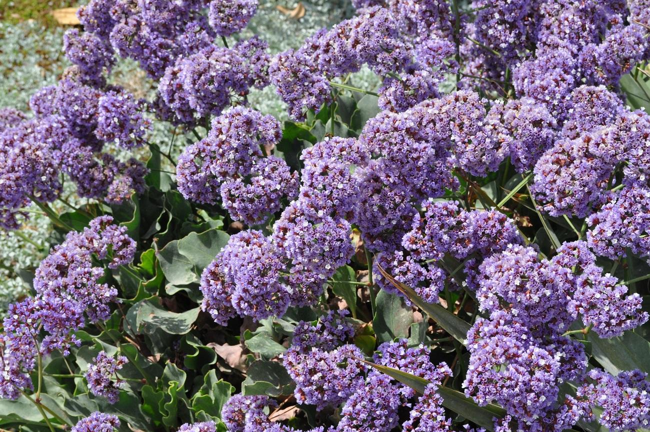 rocaille-blog-israel-dead-sea-ein-gedi-kibbutz-botanical-gardens-2
