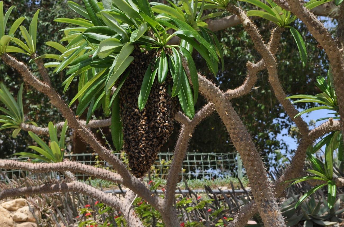 rocaille-blog-israel-dead-sea-ein-gedi-kibbutz-botanical-gardens-3