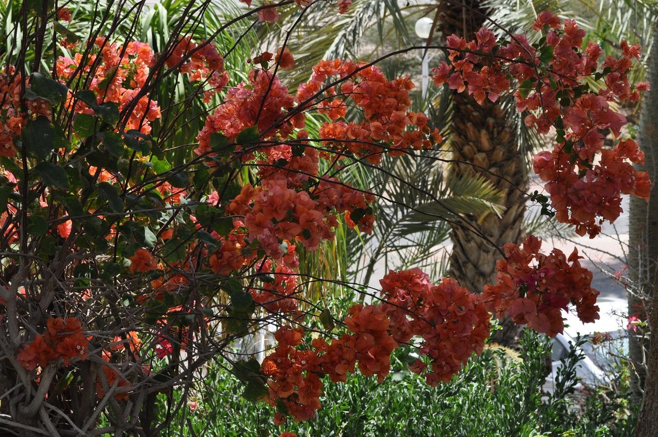 rocaille-blog-israel-dead-sea-ein-gedi-kibbutz-botanical-gardens-4