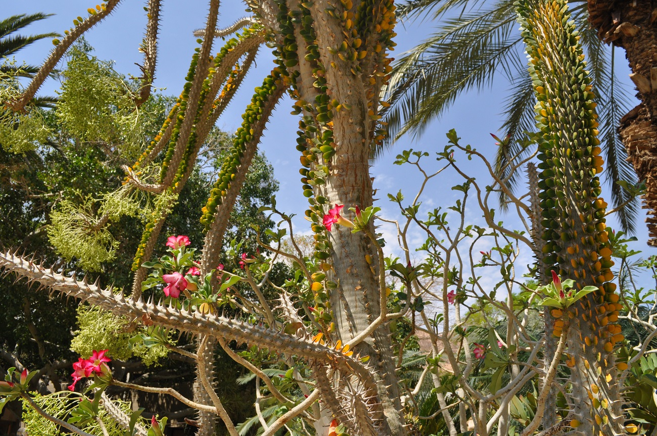 rocaille-blog-israel-dead-sea-ein-gedi-kibbutz-botanical-gardens-5