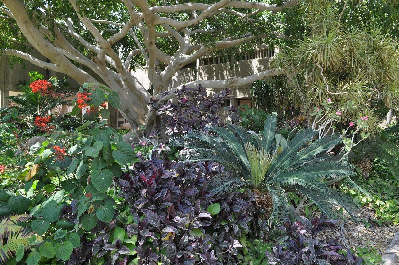 rocaille-blog-israel-dead-sea-ein-gedi-kibbutz-botanical-gardens-6