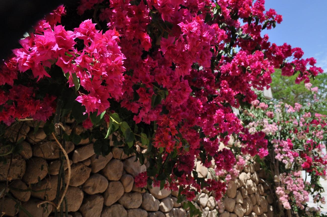 rocaille-blog-israel-dead-sea-ein-gedi-kibbutz-botanical-gardens-7