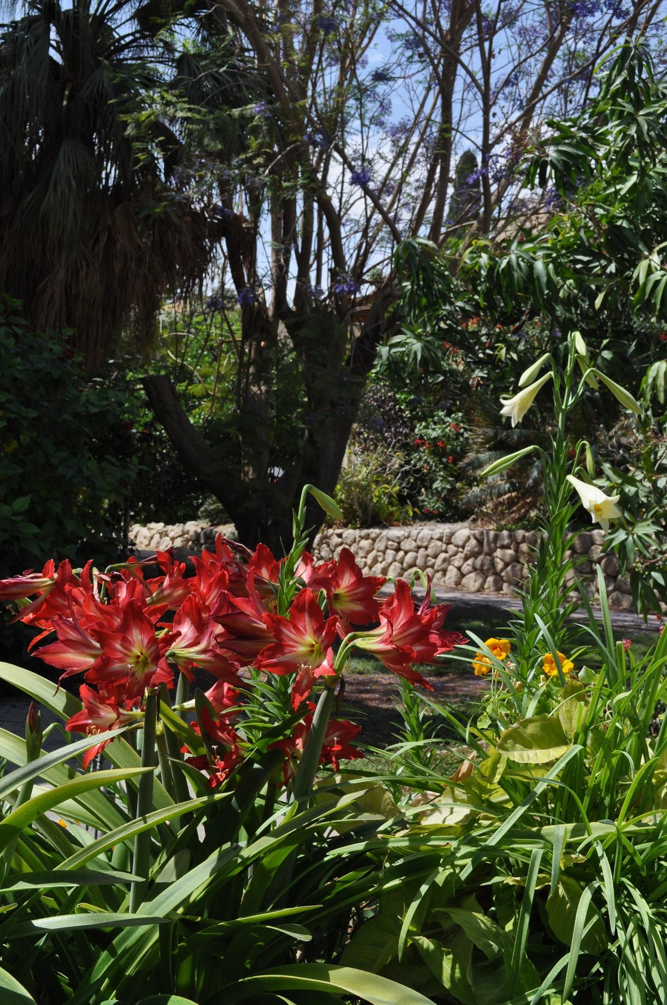 rocaille-blog-israel-dead-sea-ein-gedi-kibbutz-botanical-gardens-8