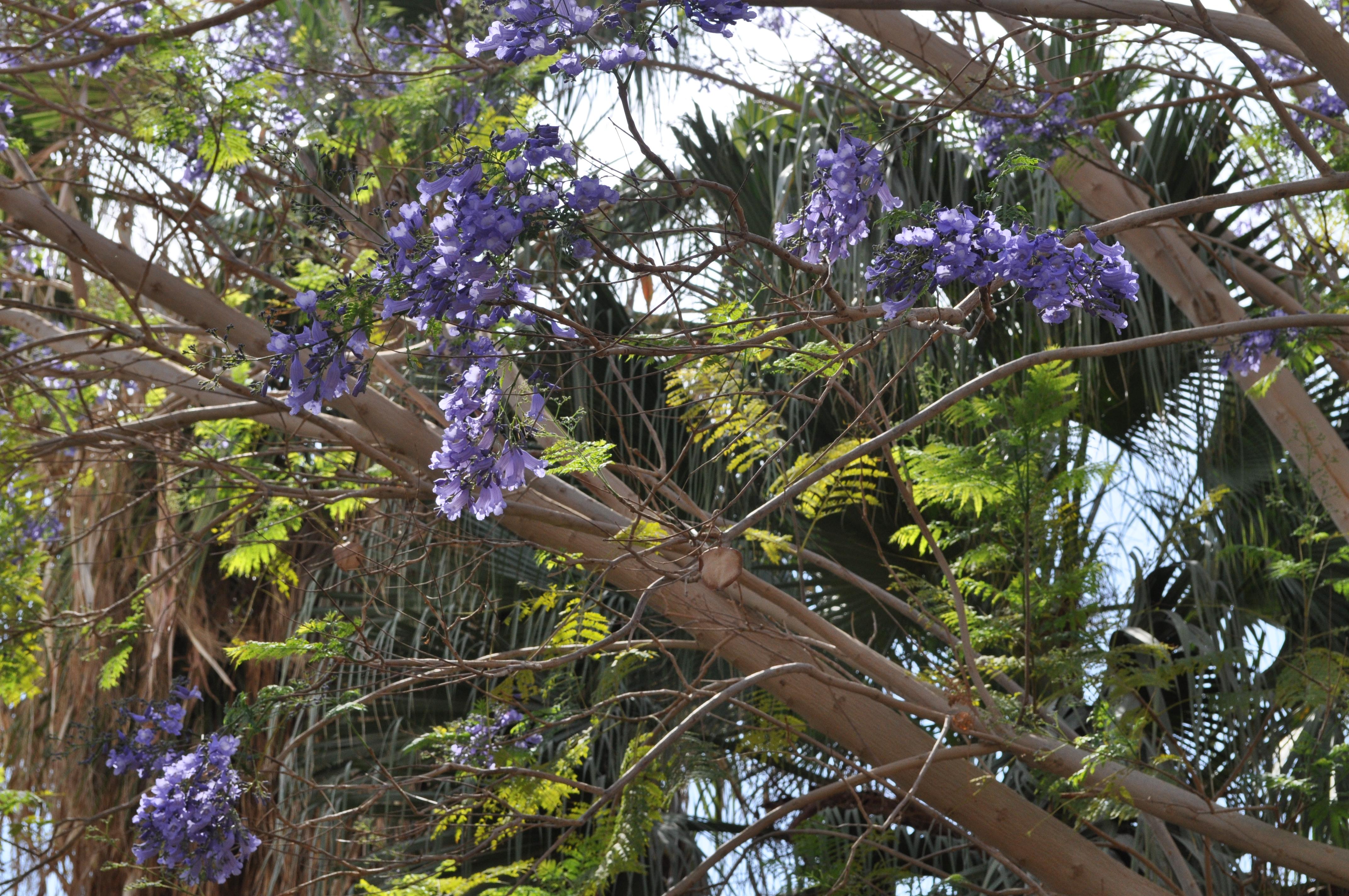 rocaille-blog-israel-dead-sea-ein-gedi-kibbutz-botanical-gardens-9