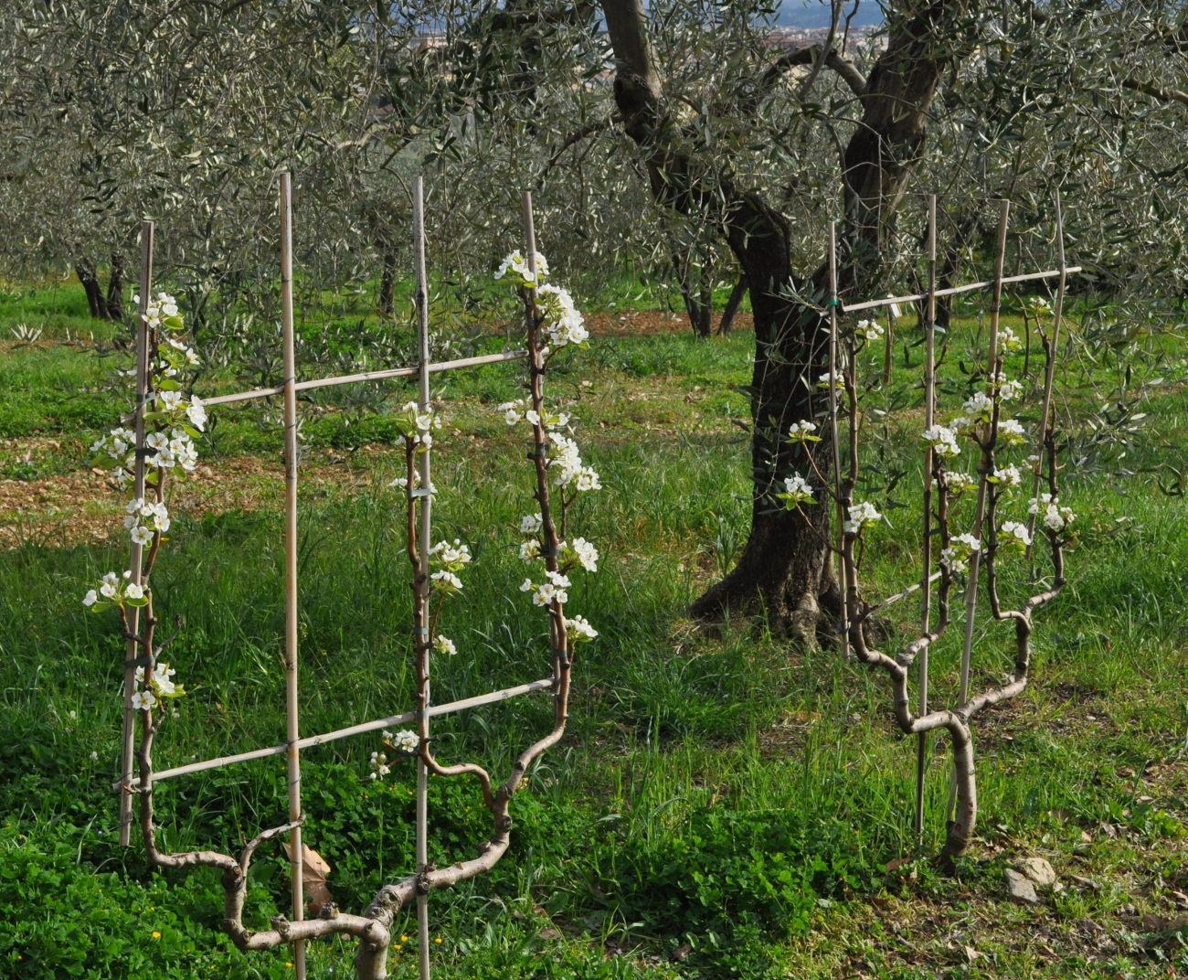 rocaille-blog-officina-profumo-farmaceutica-santa-maria-novella-giardino-negozio-storico-sede-firenze-5