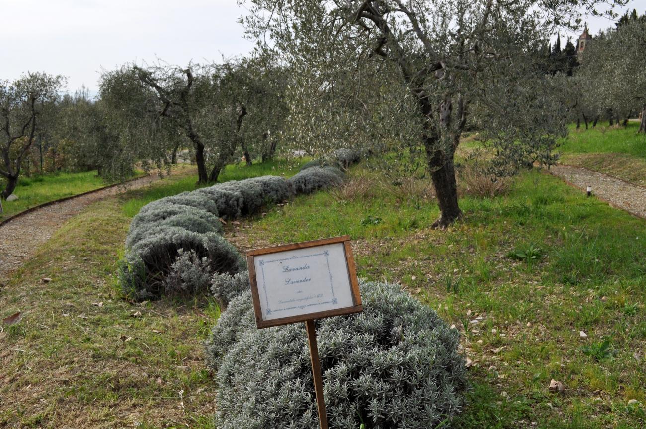 rocaille-blog-officina-profumo-farmaceutica-santa-maria-novella-giardino-negozio-storico-sede-firenze-9