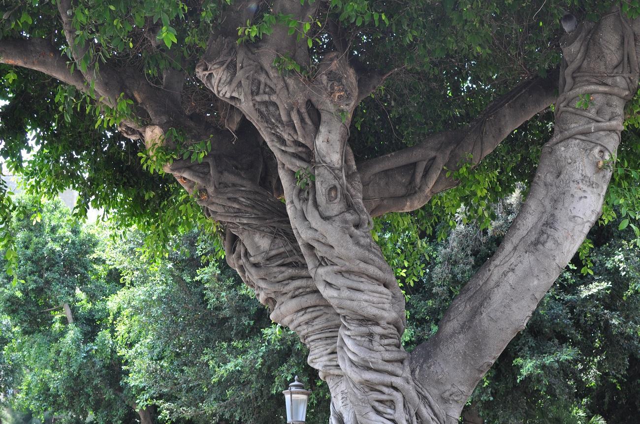 rocaille-blog-catania-sicilia-orientale-tour-3