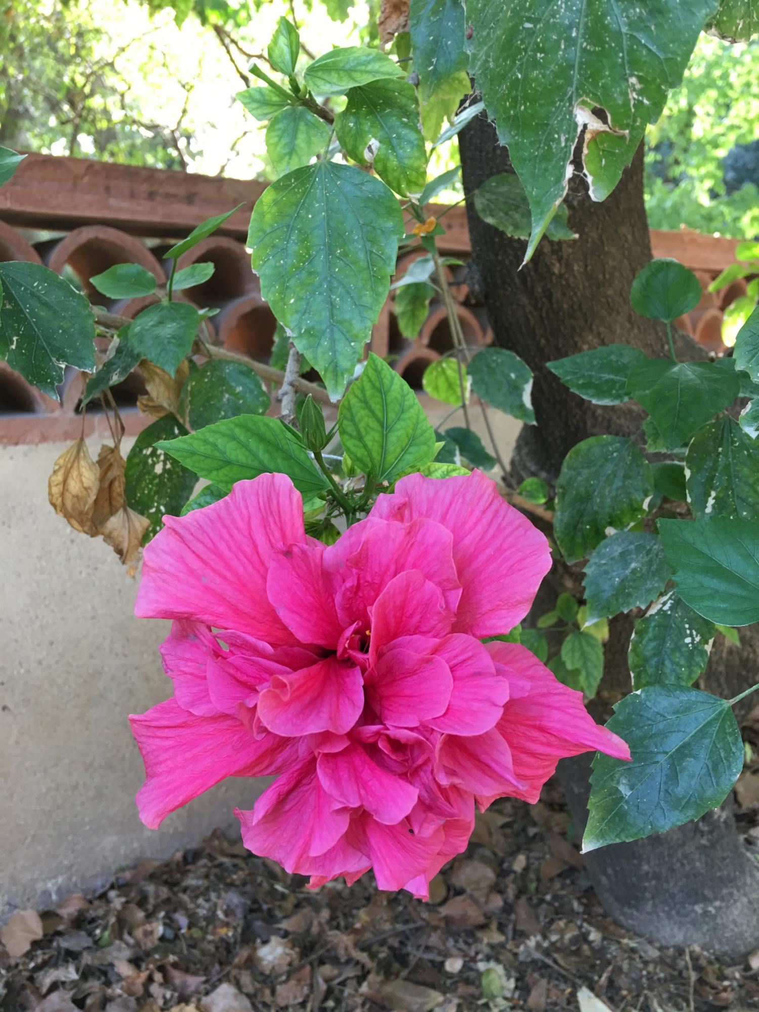 rocaille-blog-palermo-orto-botanico-botanical-garden-17