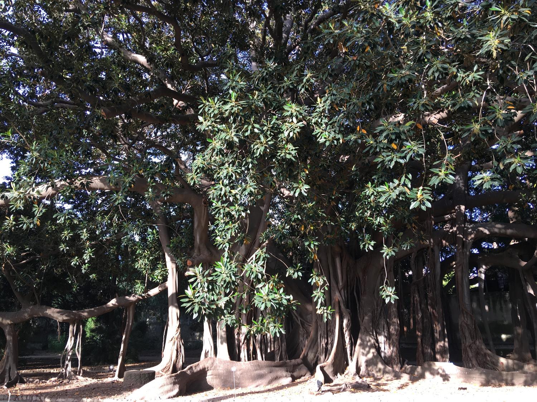 rocaille-blog-palermo-orto-botanico-botanical-garden-27