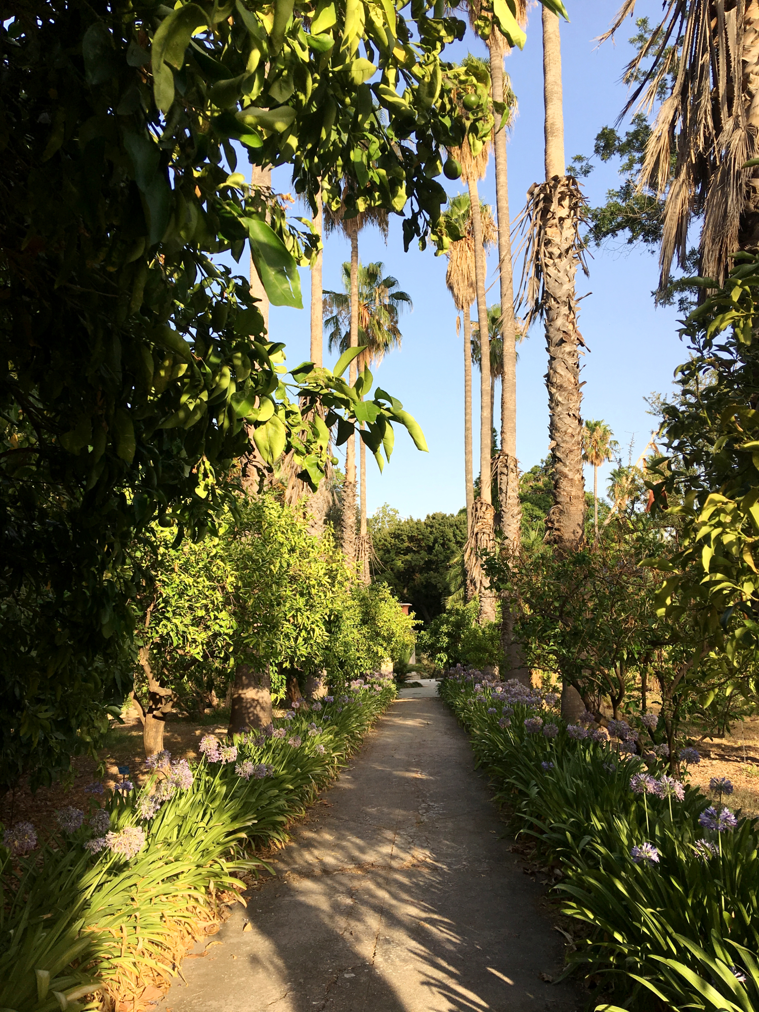 rocaille-blog-palermo-orto-botanico-botanical-garden-29
