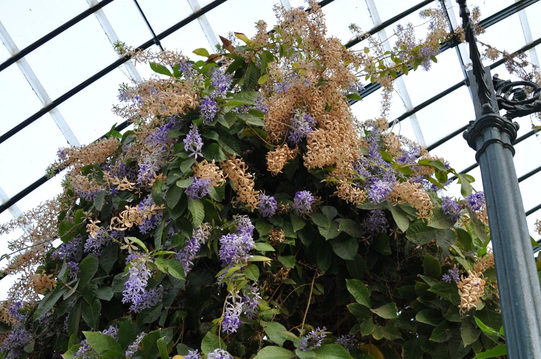 rocaille-blog-palermo-orto-botanico-botanical-garden-4